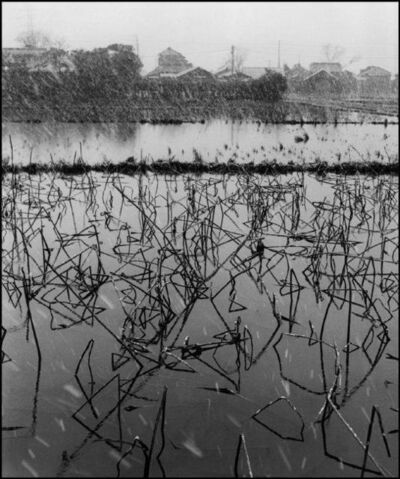 Werner Bischof, ' Rice field covered with lotus plants during the winter Japan, Tokyo', 1951