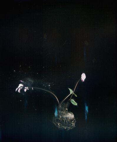 Ori Gersht, 'Black Cyclamen P05', 2018