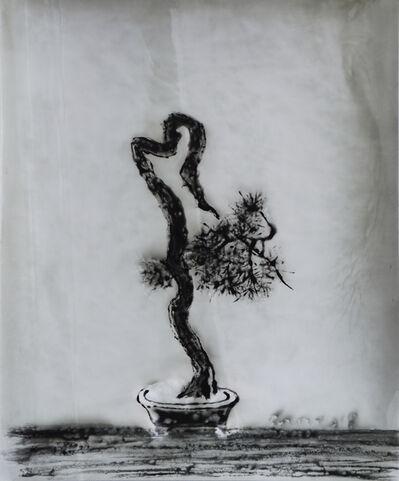 Sun Yanchu, 'Bonsai', 2018