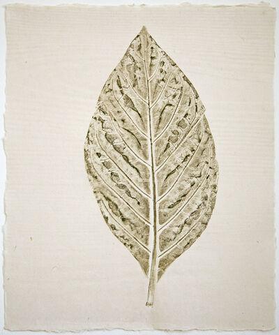 Liz Parkinson, 'Botanica Morinda citrifolia (Noni) ', 2018