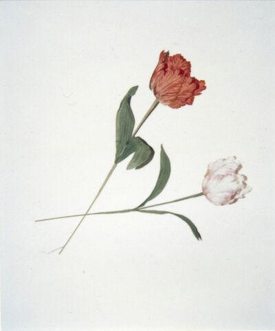 Andy Warhol, 'Flowers', 1983