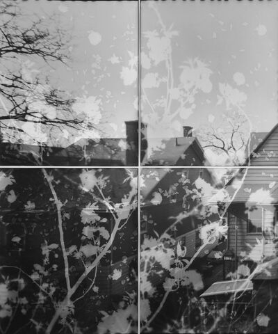 Motohiro Takeda, 'Untitled form Another Sun (Cherry Blossoms 03)', 2014