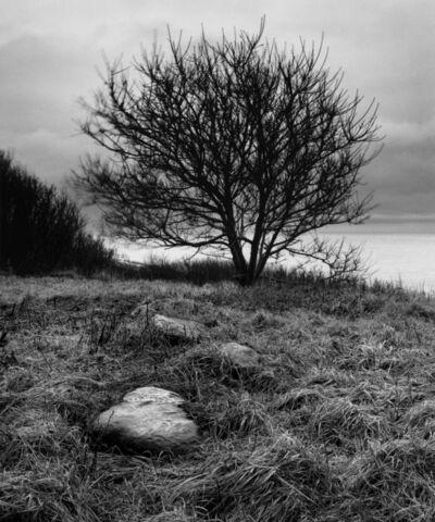 Alexandra de Steiguer, 'Tree, Star Island'