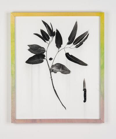 Paul Jacobsen, 'Eucalyptus and Knife', 2020
