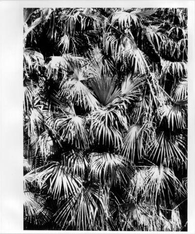 Takuma Nakahira, 'UNTITLED', 1980