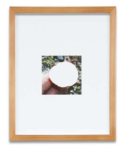 Simmons & Burke, 'Plant Cut-Out #2', 2013