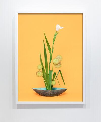 Ann Shelton, 'The Super Model, Iris (Iridaceae sp.)', 2015-ongoing