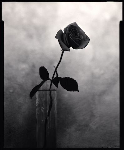Michael Kenna, 'Garden Rose', 1996