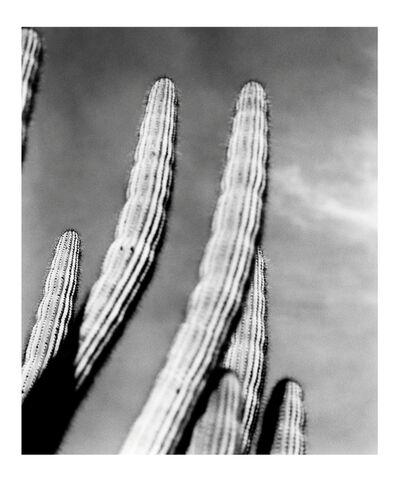 Esther Voisin, 'Cactusaction', 2010