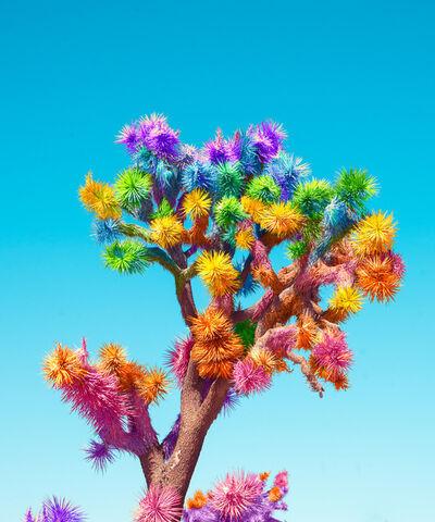 Ramzy Masri, 'Joshua Tree'