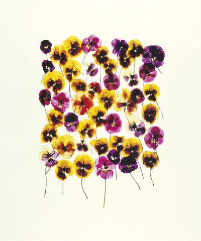 Adam Fuss, 'Untitled', 1994