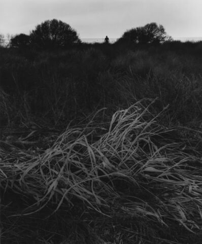 Jerry Uelsmann, 'Untitled (grasses)', 1966