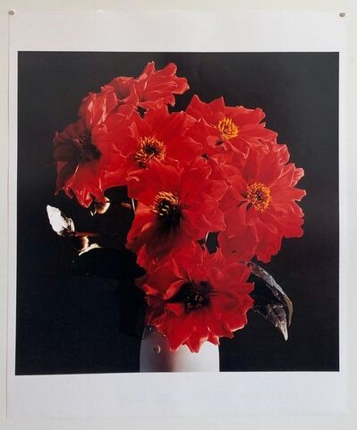 Peter C. Jones, 'Great Dahlias, Large Format Flowers Photo 24X20 Color Photograph Beach House', 2000-2009