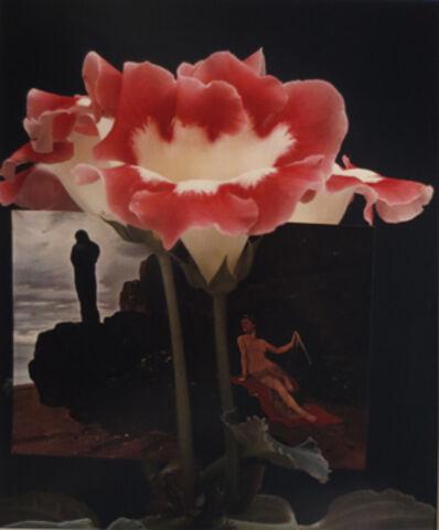 Horst P. Horst, 'Gloxinia'