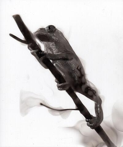 Steven Spazuk, 'Frog II', 2020