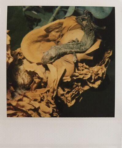 Nobuyoshi Araki, 'Flowers and Jomorinsky', 2005