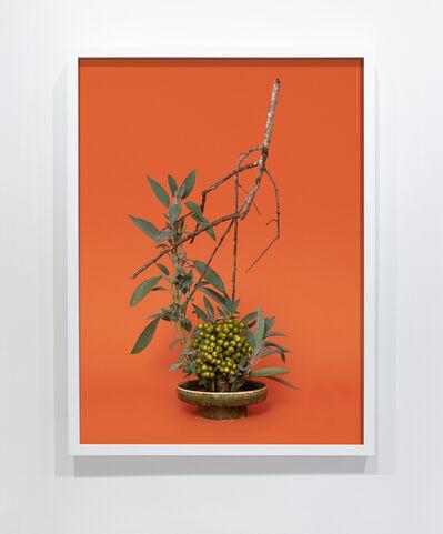 Ann Shelton, 'The Sibyl, Sage (Salvia sp.)', 2015-ongoing