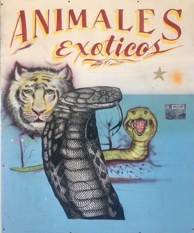 Armando Lerma, 'Animales Exitcos  ', 2018