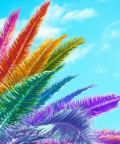 Ramzy Masri, 'Palm'