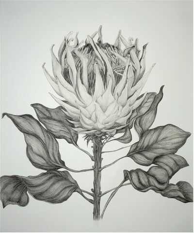 Sarah Graham, 'King Protea', 2008