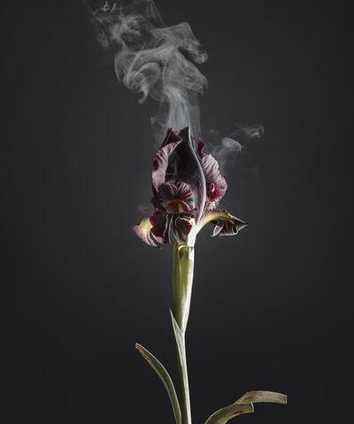 Ori Gersht, 'Iris Atropurpurea D02', 2018