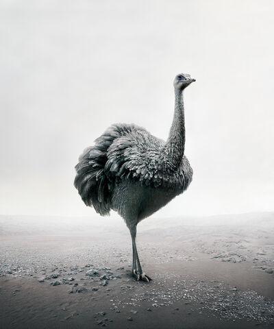 Alice Zilberberg, 'Patience Peacock', 2019