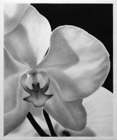 VALENTIN VAN DER MEULEN, 'Orchids III', 2017