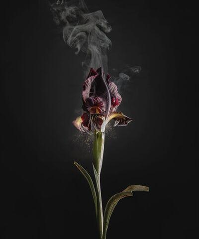 Ori Gersht, 'Iris atropurpurea D03', 2018