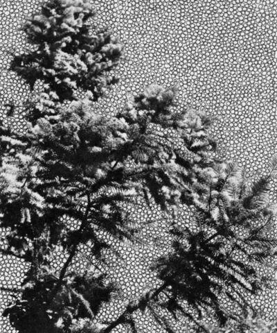Laurette Atrux Tallau, 'Untitled', 2014