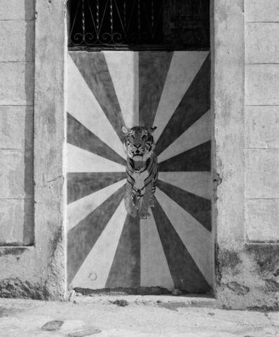 Carlos Garaicoa, 'Psychodelic Tiger', 2017
