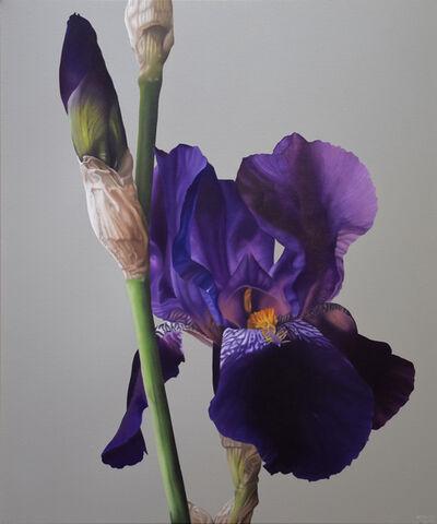 Adriana Molea, 'Iris', 2017