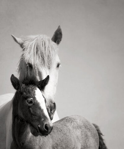 Jonathan Chritchley, 'Mare and Foal', 2012