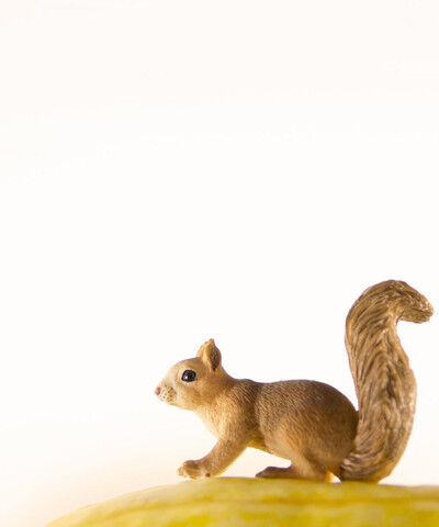 Matthew Carden, 'Squash the Squirrel'