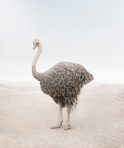 Alice Zilberberg, 'Onward Ostrich', 2020