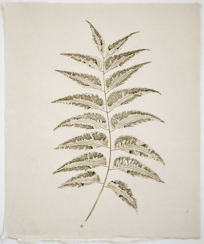 Liz Parkinson, 'Botanica Azadiracta indica (Neem) ', 2018