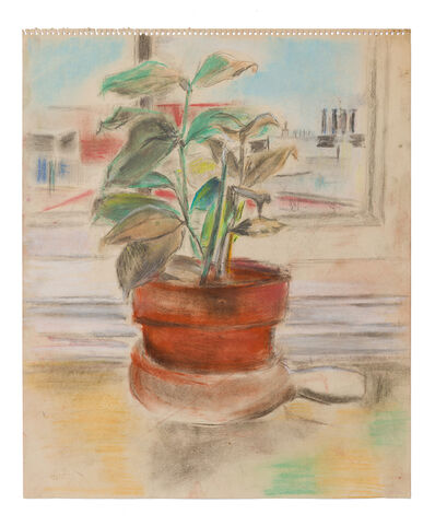 Jane Freilicher, 'Untitled (Potted Ficus Plant)'