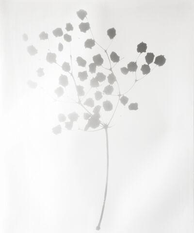 Gerda Schütte, 'Petite branche', 2011