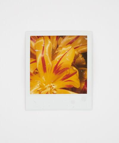 Nobuyoshi Araki, 'Untitled Polaroid Collage', 2018