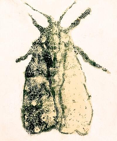 David Konigsberg, 'Moth #5', 2020
