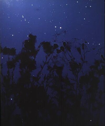 Susan Derges, 'Starfield Thistle II', 2004