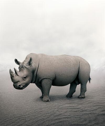 Alice Zilberberg, 'Restful Rhino', 2019