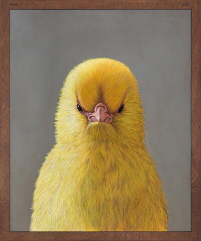 Daniel Sueiras Fanjul, 'S.N. Chick', 2015