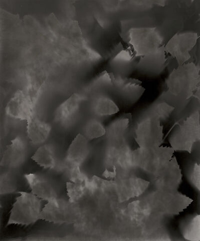 Ray K. Metzker, 'Unique Photogram of Leaves', 2007