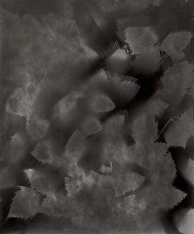 Ray K. Metzker, 'Unique Photogram of Leaves', 2007