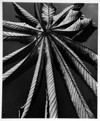 Brett Weston, 'Leaf on Asphalt, Hawaii', 1978