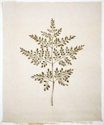 Liz Parkinson, 'Botanica Moringa oleifera (Moringa) ', 2018