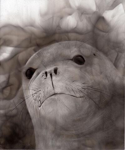 Steven Spazuk, 'Seal', 2020