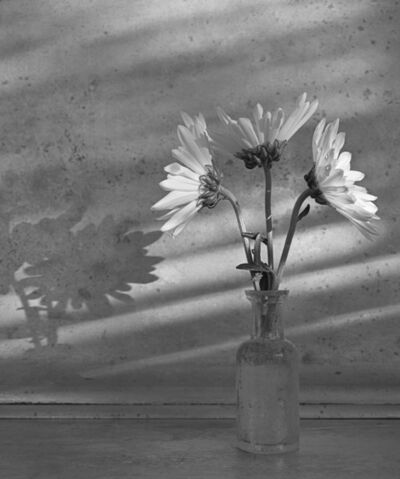 James Pitts, 'Three Dasies with Dew Drops in Small Old Bottle with Shadows on Enamel', 2020