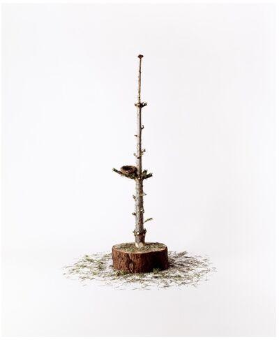 Nancy Fouts, 'Tree Nest', 2010