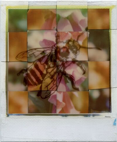 Julia Beyer, 'Generation A - Contemporary, Polaroid, Photograph, Bees, Abstract, Color', 2017